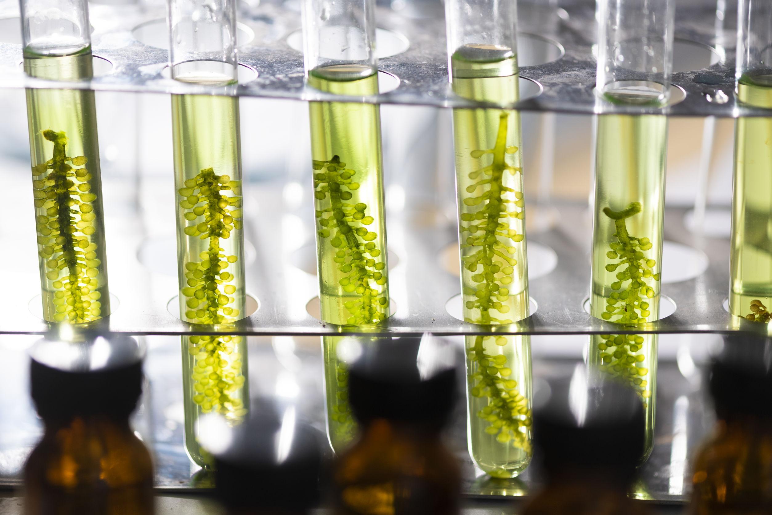 Photobioreactor in lab algae fuel biofuel industry